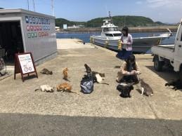 相島へ校外学習